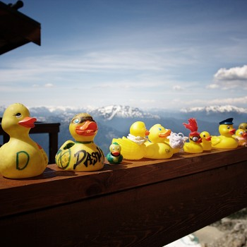 Ducks in Whistler